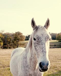 Horses 158
