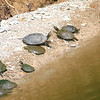 Turtle Assortment