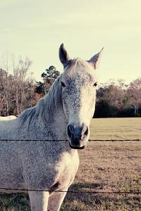 Horses 044