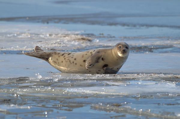 Seal sunning itself.