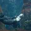 112716 Monterey Bay Aquarium - Monterey 081a