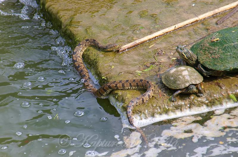 The Smallest Turtle Seems Nervous