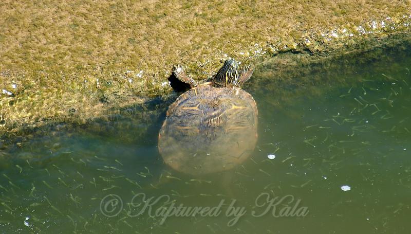 Turtle Buffet