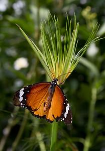 Nice butterfly in the Volcji Potok arboretum, Slovenia
