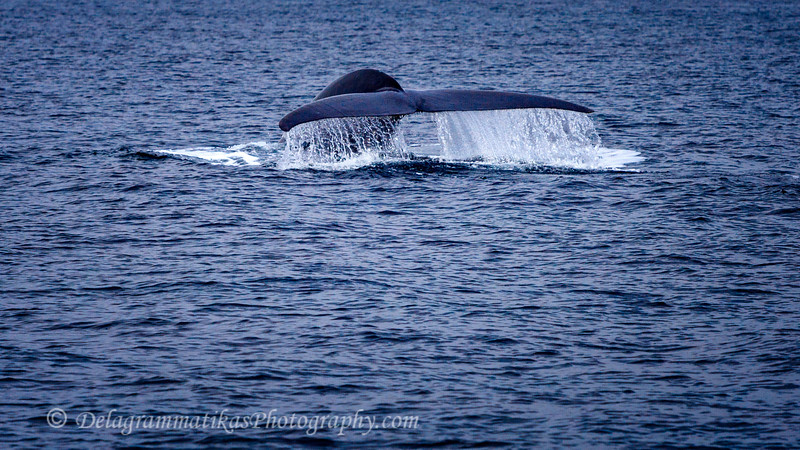 20110924_Whales & Dolphins_2383