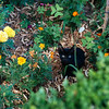 Kitty at Alhamabra Gardens