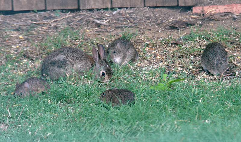 Those Are Not Baby Bunnies