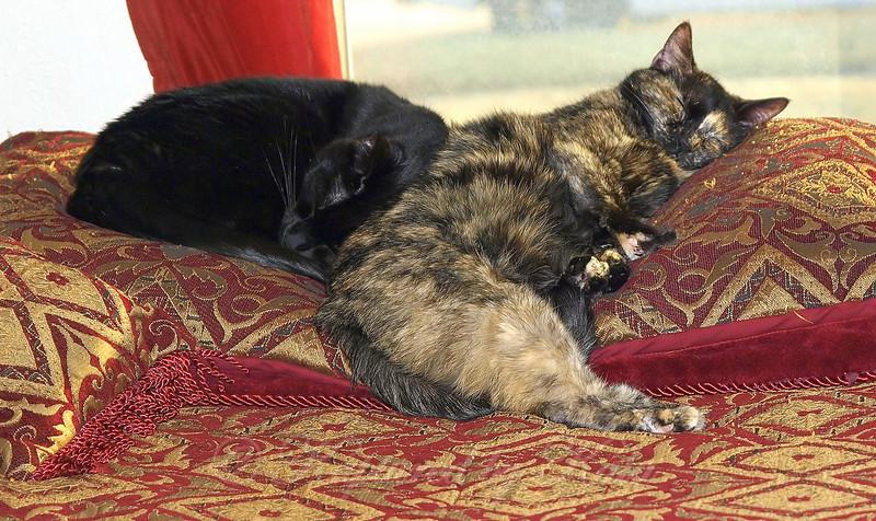 Snuggle Siblings