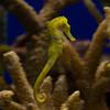 092609 Aquarium 27a