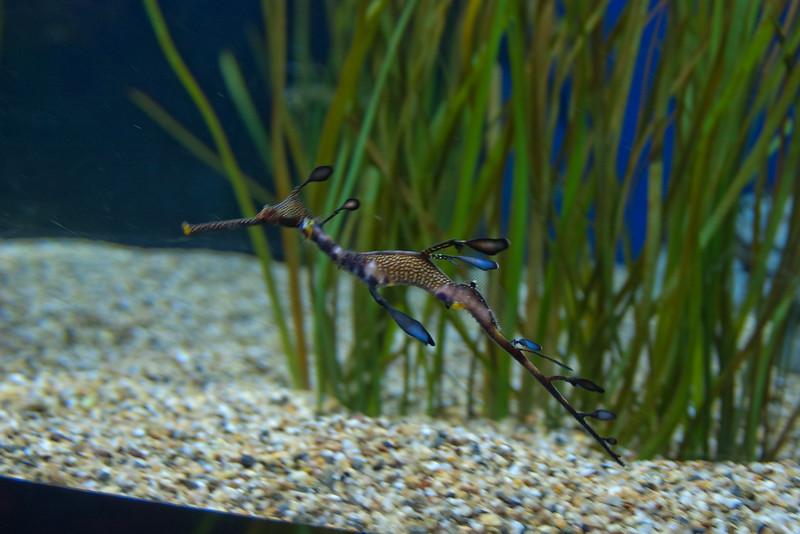 122912 Monterey Bay Aquarium 086