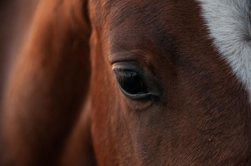Horse dreams...