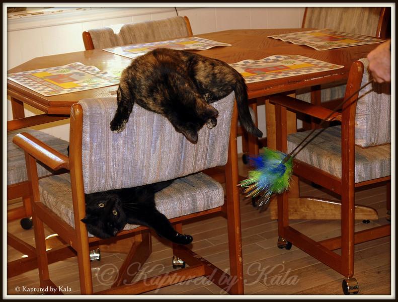 Hmmmm, slap sister or go for toy?