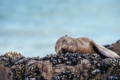 Seal Nap