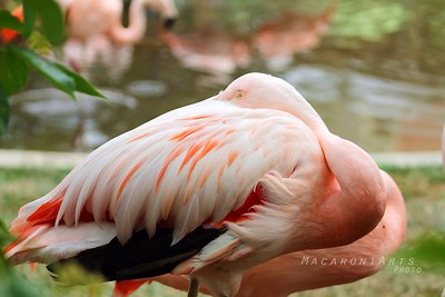 Curious Flamingo