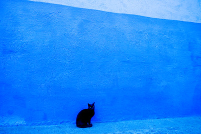 black cat, blue wall, morocco