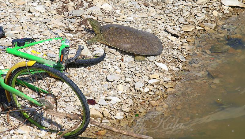 Urban Turtles