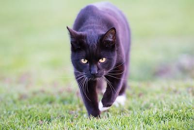 Cat , Katt , Tusse