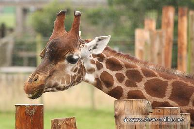 Blair Drummond Safari Park, Scotland