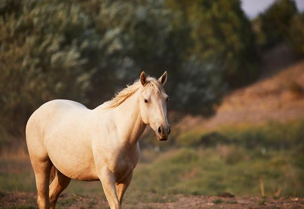Horses Huddled together