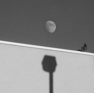 Bird and Moon