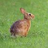 Sunshine Bunny