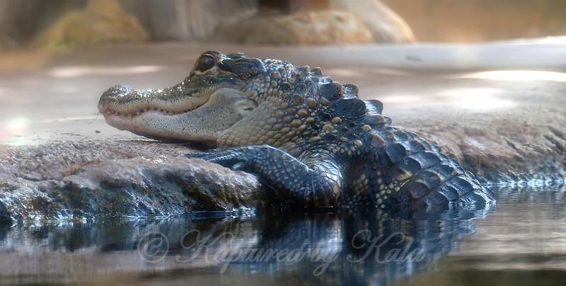 See Ya Later, Alligator