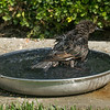 082816 Bird Bath - Salinas 008 5x7L