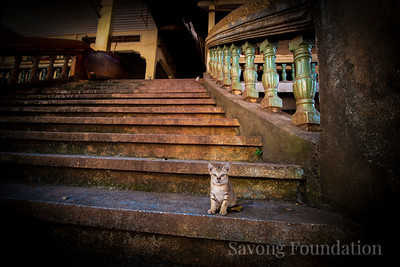 Kitten on the Stairs