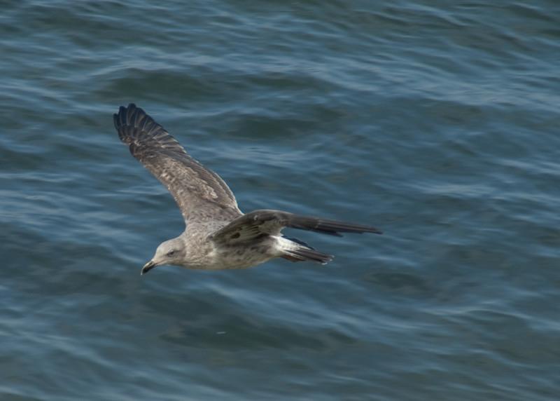 082412 Monterey Bay 015 5x7L