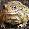 Toadally Awesome Face Shot