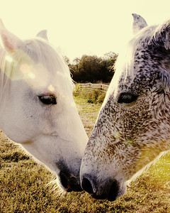 fortheloveofhorses