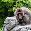 Pensive Monkey
