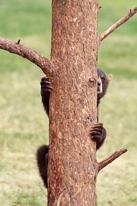 Baby Bear Hiding