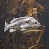 031917 Monterey Bay Aquarium - Monterey 021