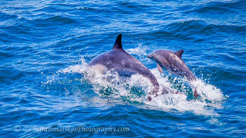 20170729_Dolphins_3854