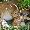Snugling Cub