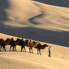 Bactrian Camels at The Khongor Sand Dunes