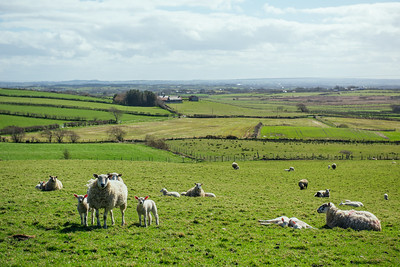 North Ireland Countryside