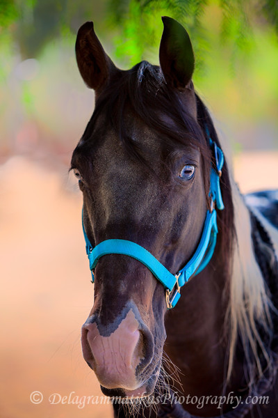 20160924_Horses_9633