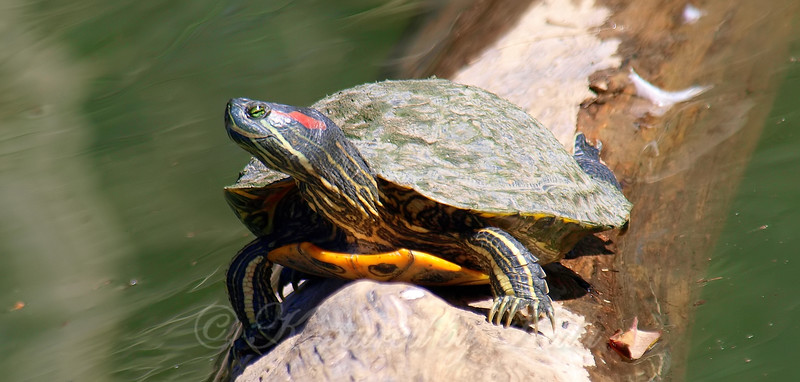Turtle Smile