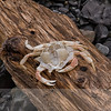 Empty Crab Shell on a Log
