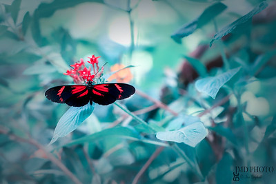 Beautiful postman butterfly selective soft focus nature image