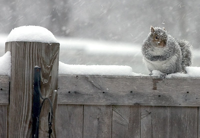 Squirrel sitting in the snow
