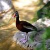 DSC_0065 bird