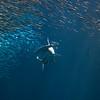 112716 Monterey Bay Aquarium - Monterey 118a