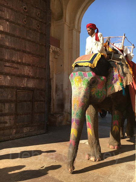 Painted elephant, Amber Palace, India