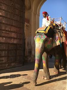 Painted elephant, Amber Palace, India