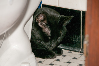 When I firts brought him home, Greebo hid in the bathroom behind the toilet for the better part of a day