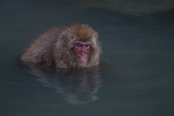 Monkey See Japan One