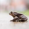 Hypno Toad II